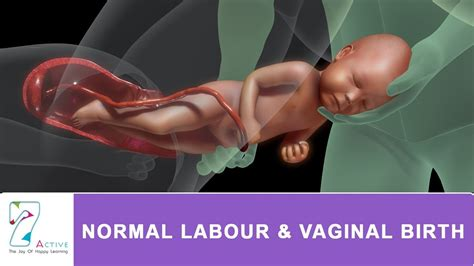 am i normal vaginal opening jpg 1280x720